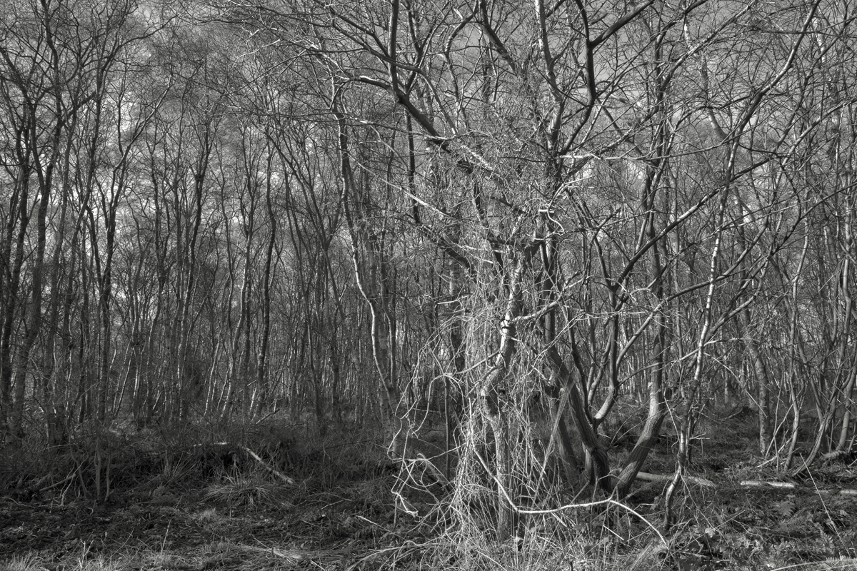 8 neolithic woods, shapwick